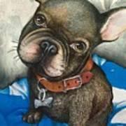 Sammy The French Bulldog Art Print