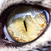 Sammy's Eye Art Print