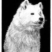 Samoyed Dog Art Print