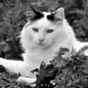 Sampson In Black And White Art Print
