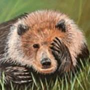 San Diego Bear Art Print