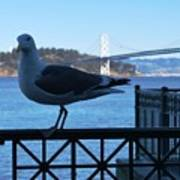 San Francisco - Oakland Bay Bridge - Seagull View Art Print