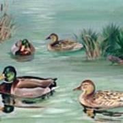 Sanctuary For Ducks Art Print
