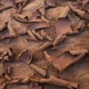 Sand And Mud Curls Art Print