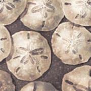 Sand Dollars Art Print