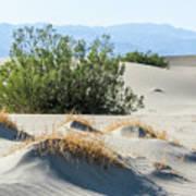 Sand Dunes, Plants, Mountains Art Print