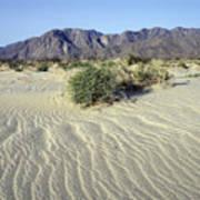 Sand Dunes & San Ysidro Mountains At El Art Print