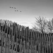 Dune Fences - Grayscale Art Print