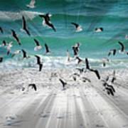 Sandestin Seagulls C Art Print