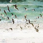 Sandestin Seagulls D Art Print