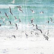 Sandestin Seagulls E Art Print