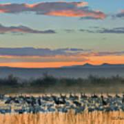 Sandhill Cranes And Snow Geese Art Print