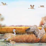Sandhill Cranes-jp3159 Art Print