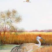 Sandhill Cranes-jp3160 Art Print
