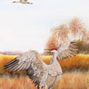Sandhill Cranes-jp3161 Art Print