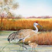 Sandhill Cranes-jp3162 Art Print