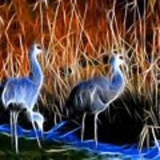 Sandhill Cranes Pair Fractal Art Print