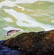 Sandpiper At Ponce Inlet Art Print