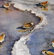 Sandpiper Seashore Art Print