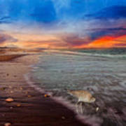 Sandpiper Sunrise Art Print