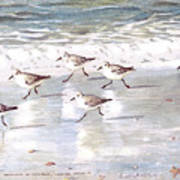 Sandpipers On Siesta Key Print by Shawn McLoughlin