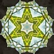 Sandstar Art Print