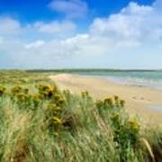 Sandunes At Fethard, Co Wexford, Ireland Art Print