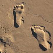 Sandy Toes Art Print