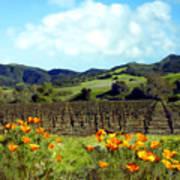 Sanford Ranch Vineyards Print by Kurt Van Wagner