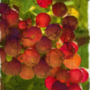 Sangiovese Grapes Art Print