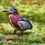 Sanibel Green Heron Art Print