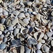 Sanibel Island Seashells I Art Print