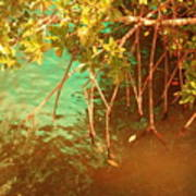 Sanibel Mangroves Art Print