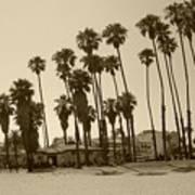 Santa Barbara Palms Art Print