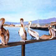Santa Barbara Pelicans Art Print