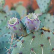 Santa Fe Prickly Pear Cactus Art Print