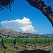 Santa Ynez Vineyard View Print by Kathy Yates