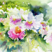 Sarasota Orchids Art Print