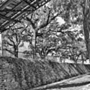 Savannah Perspective - Black And White Art Print