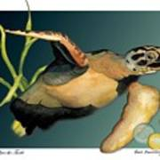 Save The Turtle Art Print