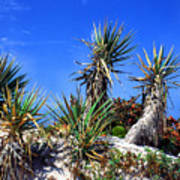 Saw Palmetto Canaveral National Seashore Art Print