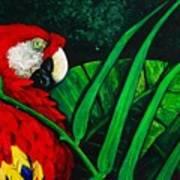 Scarlet Macaw Head Study Art Print