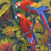 Scarlet Macaws Art Print