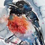 Scarlet Robin Art Print