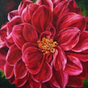 Scarlet Stunner Art Print