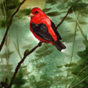 Scarlet Tanager Art Print