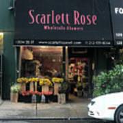Scarlett  Rose Art Print