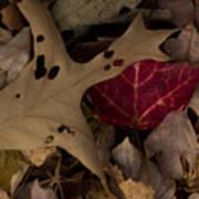 Scary Leaves Art Print
