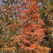 Scenic Autumn  Art Print
