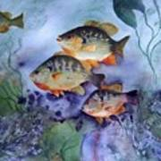 School's Out - Bluegills Art Print